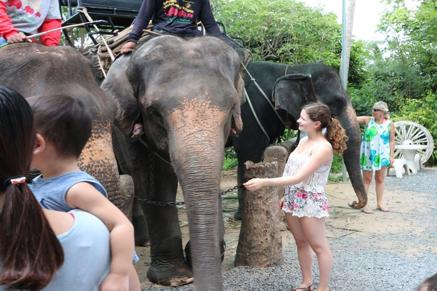 Living Thailand – tour to the family Eco-farm of elephants, Koh Samui, Thailand