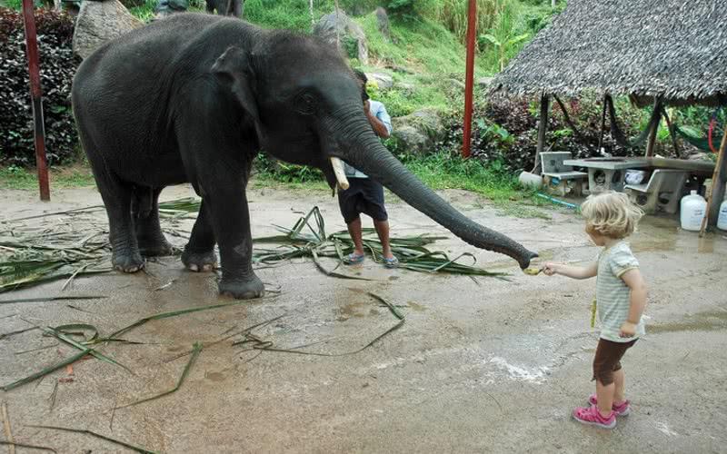 Authentic local experience at Koh Phangan, Koh Samui, Thailand