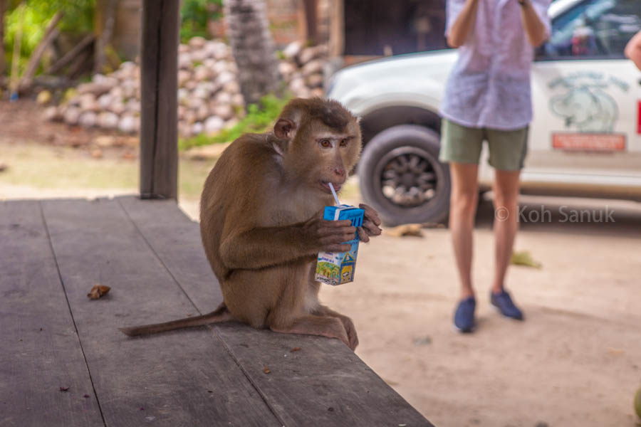 Eco-nature half day safari at Koh Phangan, Koh Samui, Thailand