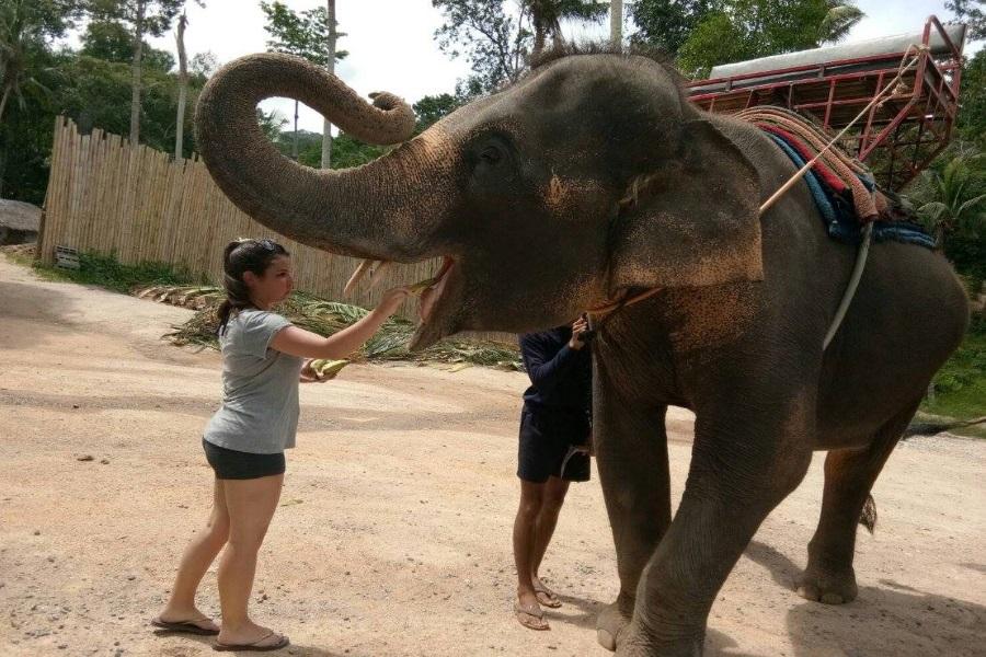 Budget safari around Koh Phangan, Koh Samui, Thailand
