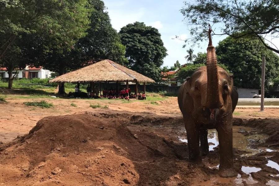Samui Elephant Sanctuary, Koh Samui, Thailand