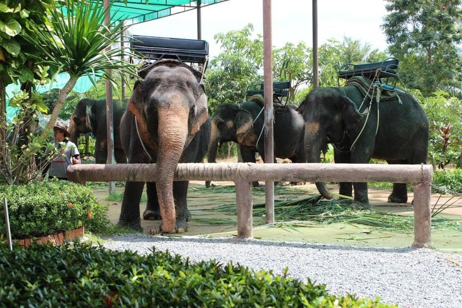 Elephant trekking, Koh Samui, Thailand