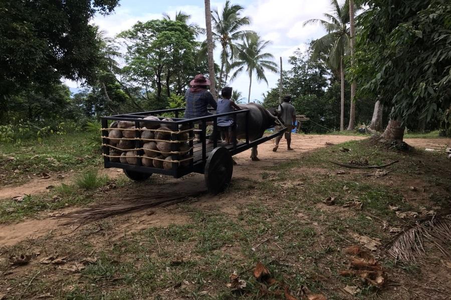 Exclusive safari tours, Koh Samui, Thailand