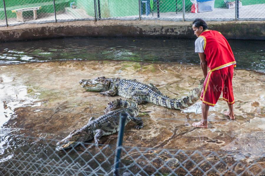 Crocodile show, Koh Samui, Thailand