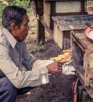 Secrets of Phangan, Koh Samui